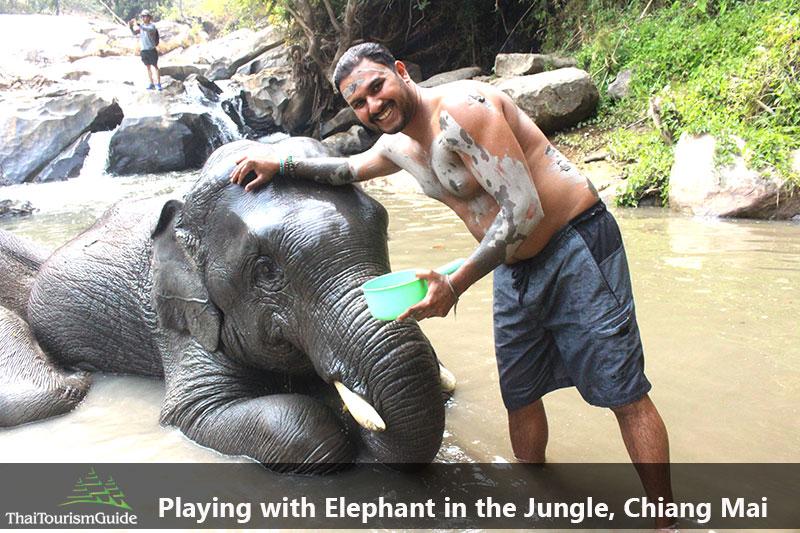 Bathing Elephants at Elephant Jungle Sanctuary Chiang Mai.