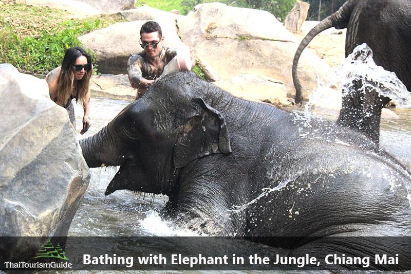 Bathing Elephants at Elephant Jungle Sanctuary Tour