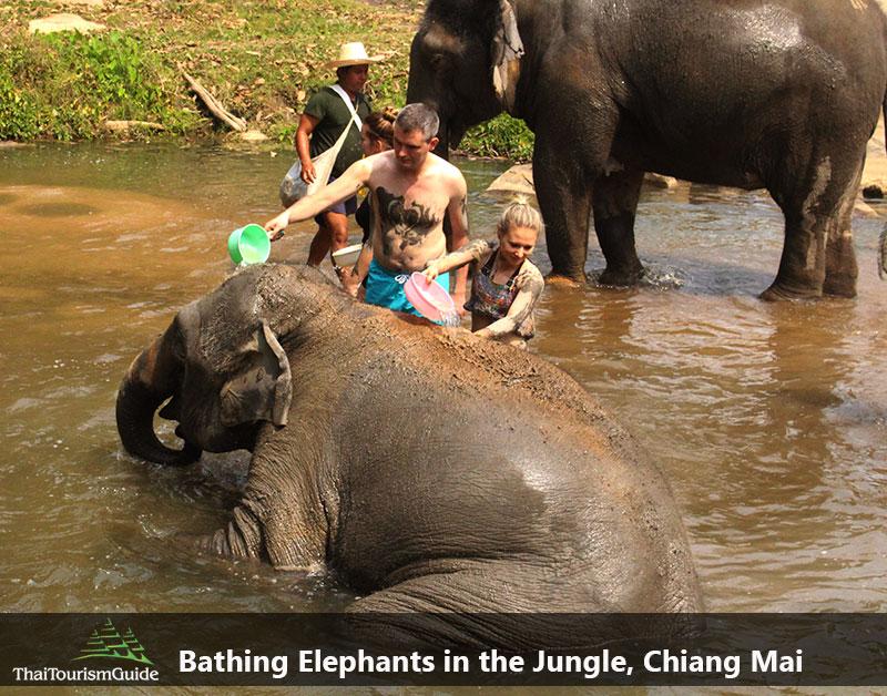 Bathing Elephants at one day tour elephant sanctuary Chiang Mai