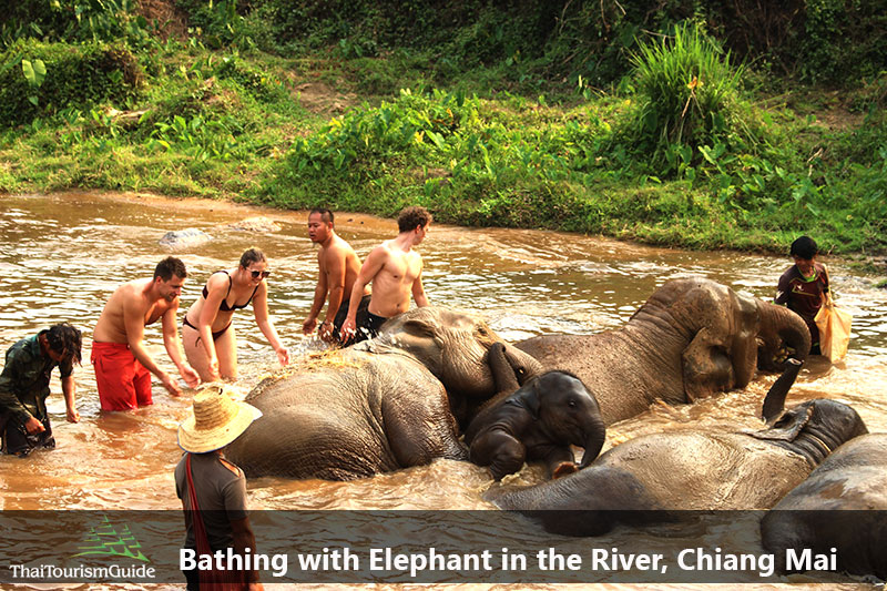Bathing with Thai elephants in join tour half day elephant Chiang Mai