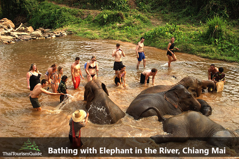 Swimming and Bathing with Elephants at half day elephant Chiang Mai