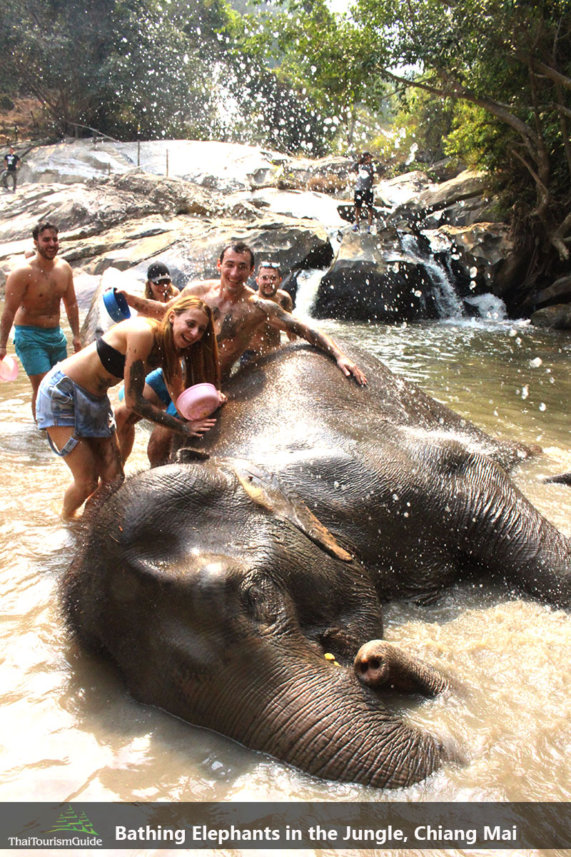 Bathing Elephants at the best elephant sanctuary Chiang Mai