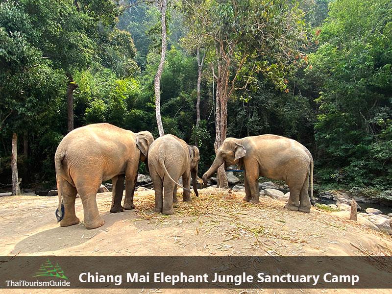 Chiang Mai elephant jungle sanctuary camp Thailand