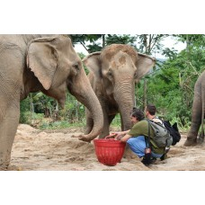 Care for Elephants - Single Day Trip