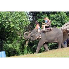Elephant Ride at Taweechai Elephant Camp