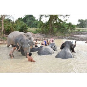 Elephant Jungle Sanctuary Pattaya Half day Program