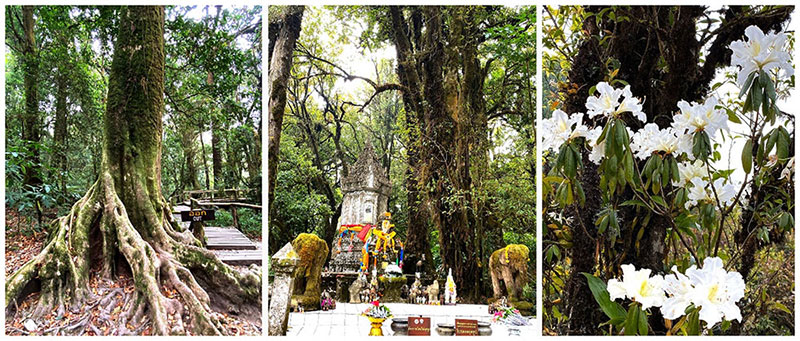 Highlight of Doi Inthanon trekking tour in Chiangmai