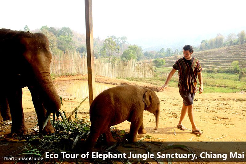 half day elephant Chiang Mai