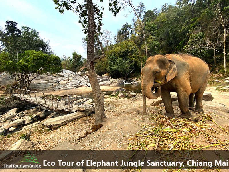Eco Tourism Elephant Tour Chiang Mai in Thailand.