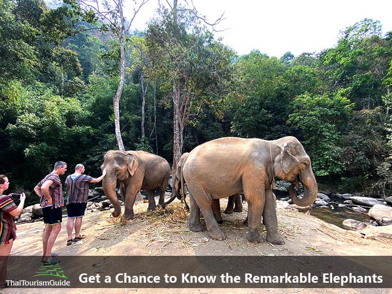 Meet the elephants Elephant Jungle Sanctuary Chiang Mai
