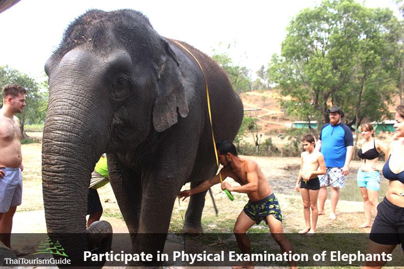Elephant Physical Examination