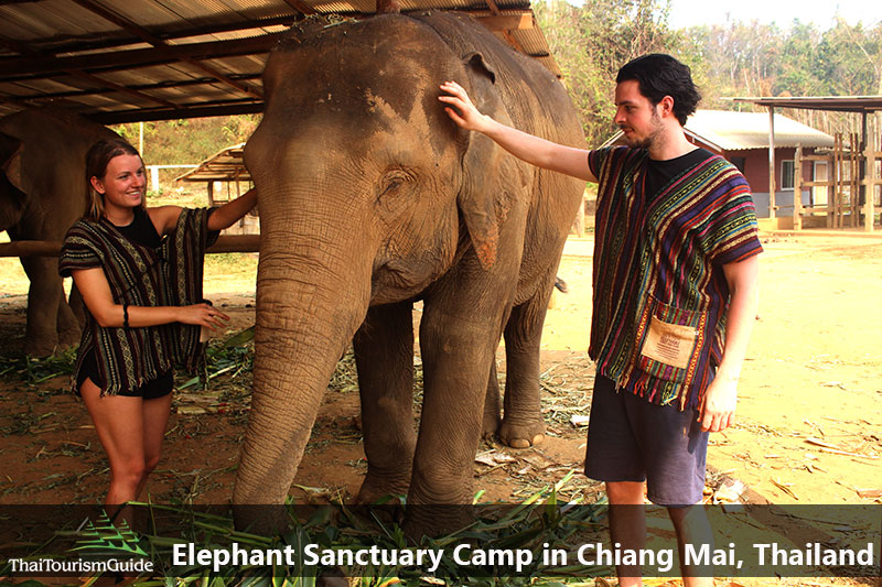 Elephant sanctuary Chiang Mai half day Tour