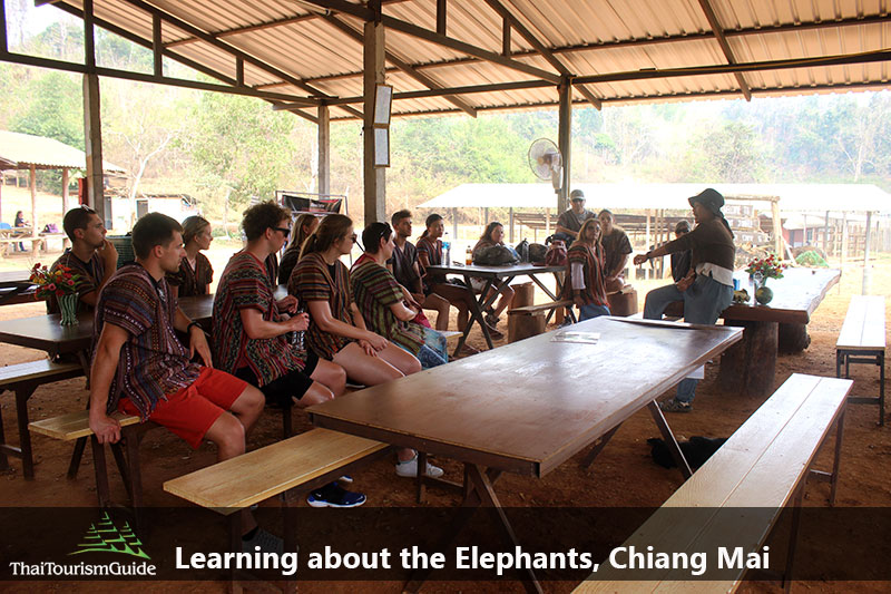 Meet your English-speaking guide and learn rough information about the elephants