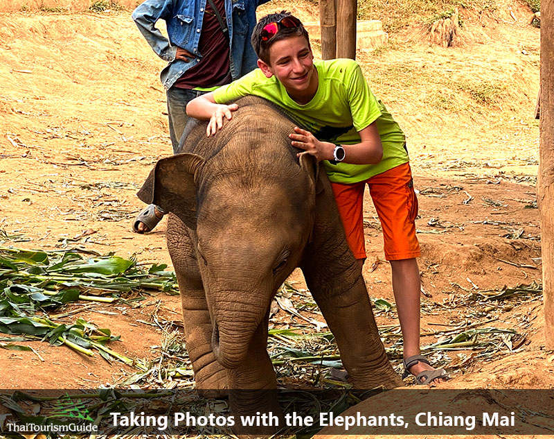 Half day morning elephant jungle sanctuary camp in Chiang Mai