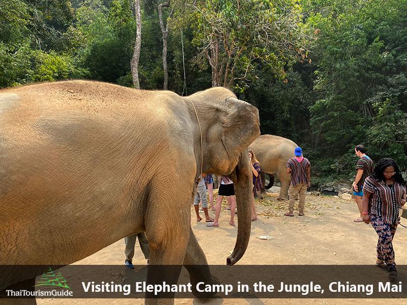 One day tour elephant sanctuary Chiang Mai